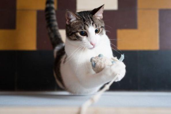 De nombreux jouets pour chat sont à retrouver sur Catapart.fr
